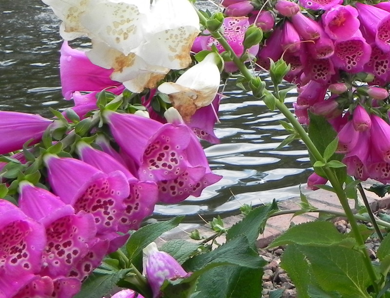 flowers cropped